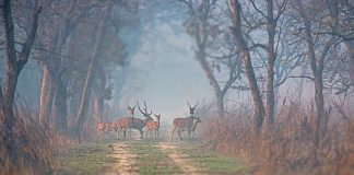 Dudhwa National Park