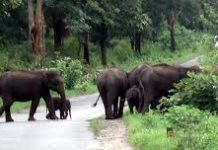 Mudumalai Wildlife Sanctuary