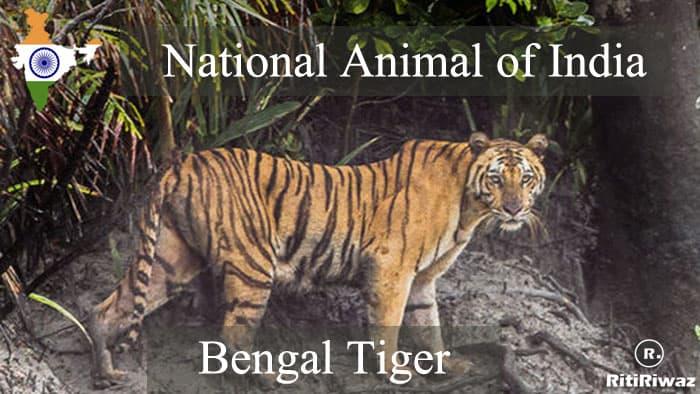 National Animal of India | Indian National Animal