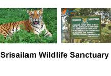 Nagarjunasagar - Srisailam Sanctuary Tiger reserve
