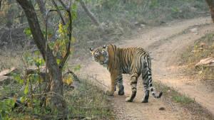 Sundarban Tiger Reserve
