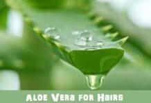 Aloe vera for hairs