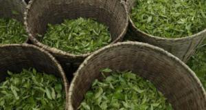 Darjeling tea