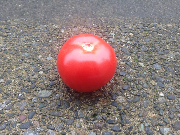 globe shape tomato