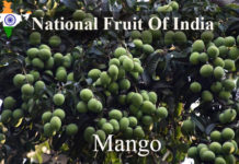 National Fruit Of India