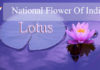 National Flower Of India