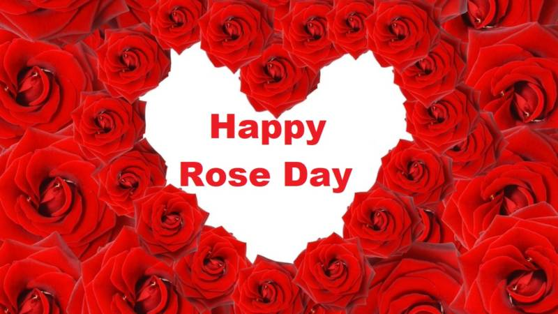 Rose Day (7th February)