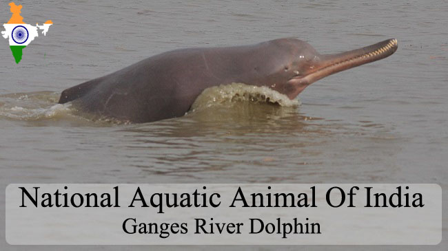 National Aquatic Animal Of India | River Dolphin