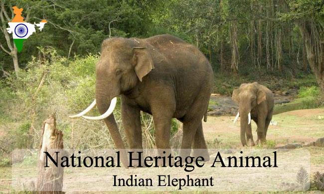 National Heritage Animal Of India | Indian Elephant