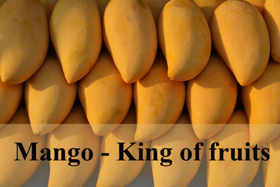 Mango | Mango Health Benefits