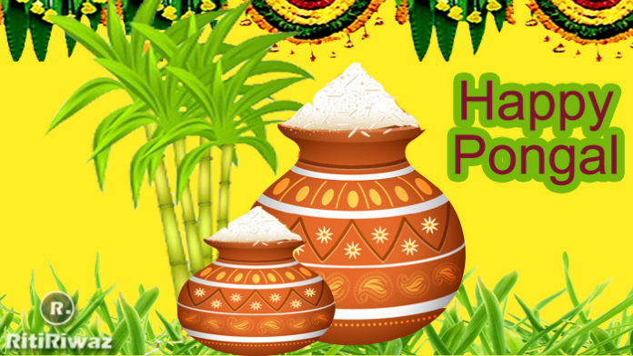 Pongal 2020: Wishes, Messages, Quotes, Photo, Facebook and Whatsapp messages