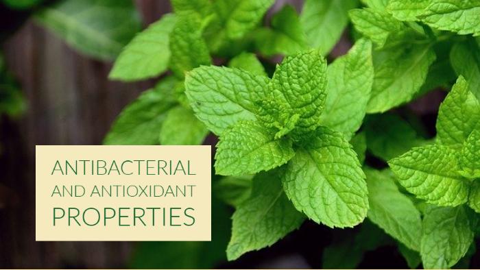 Antibacterial and Antioxidant Properties