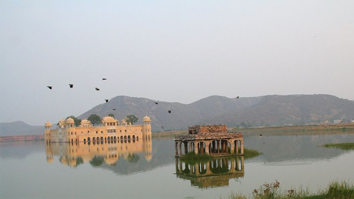Birds Near Jal Mahal