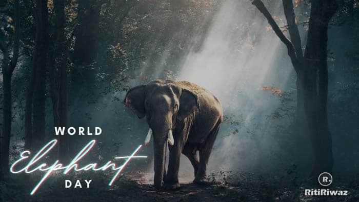 World Elephant Day – August 12