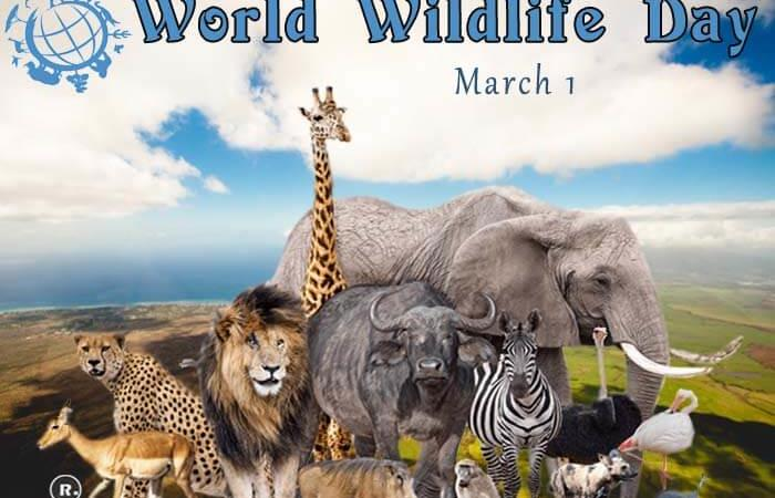 World Wildlife Day – 3rd March