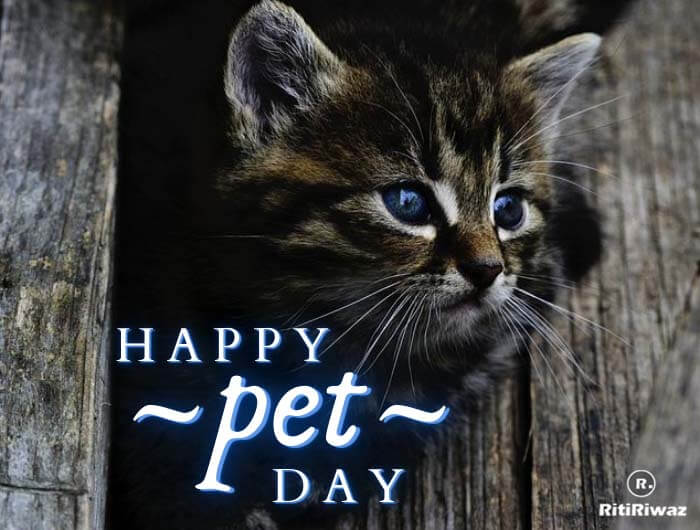 Pet Day Quotes