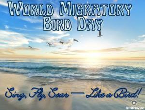 World Migratory Bird Day 2021
