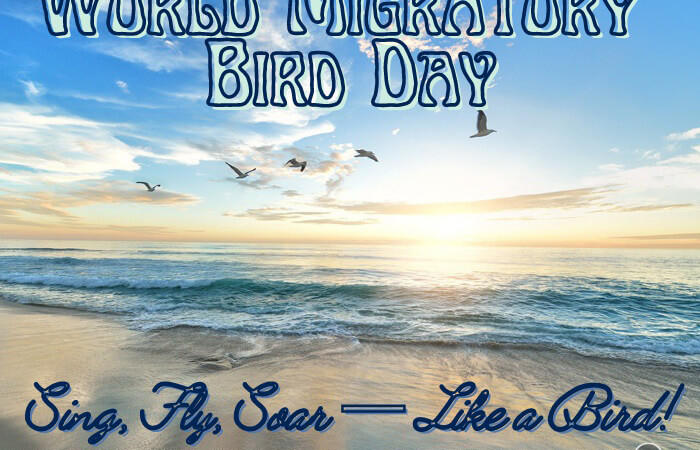 World Migratory Bird Day – 8th May