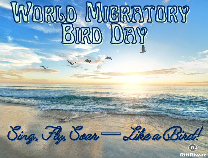 World Migratory Bird Day – 8th May