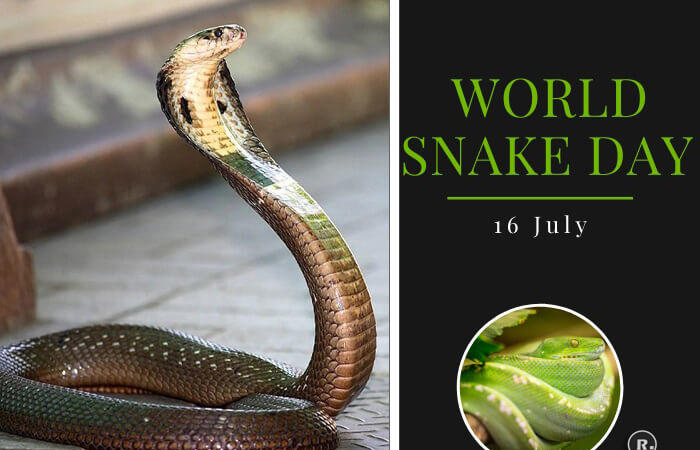World Snake Day – 16th July